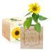 Ecocube personalizzato cornice fiorita girasole