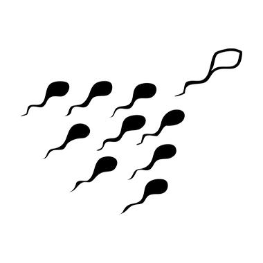 Sticker Spermatozoi