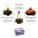 Fiori magici tè nero